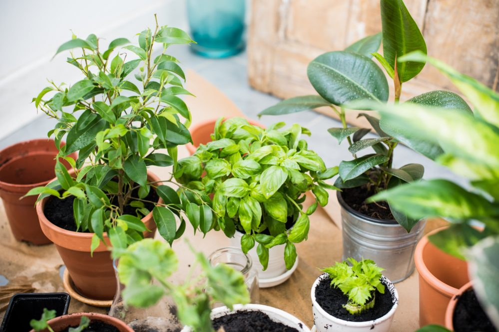 indoor garden Preparation