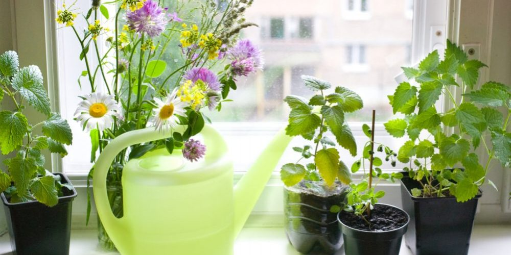 How to Grow Herbs Indoors on Your Sunny Windowsill?