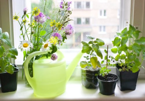 Windowsill Herb Garden: The Complete Steps & Tricks