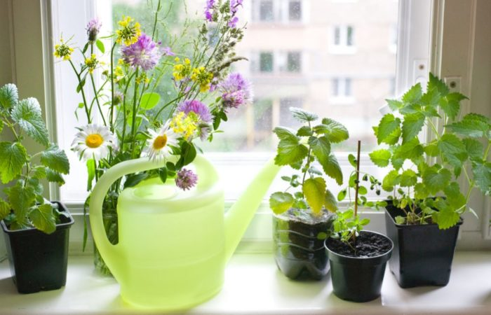 Windowsill Herb Garden: The Complete Steps & Tricks