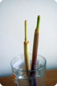 lemon grass from kitchen scraps