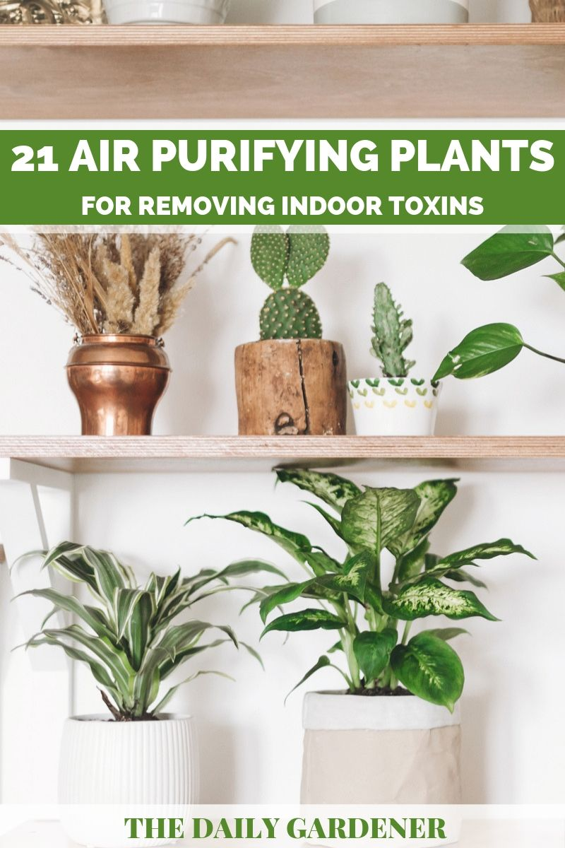 purify air plants 1