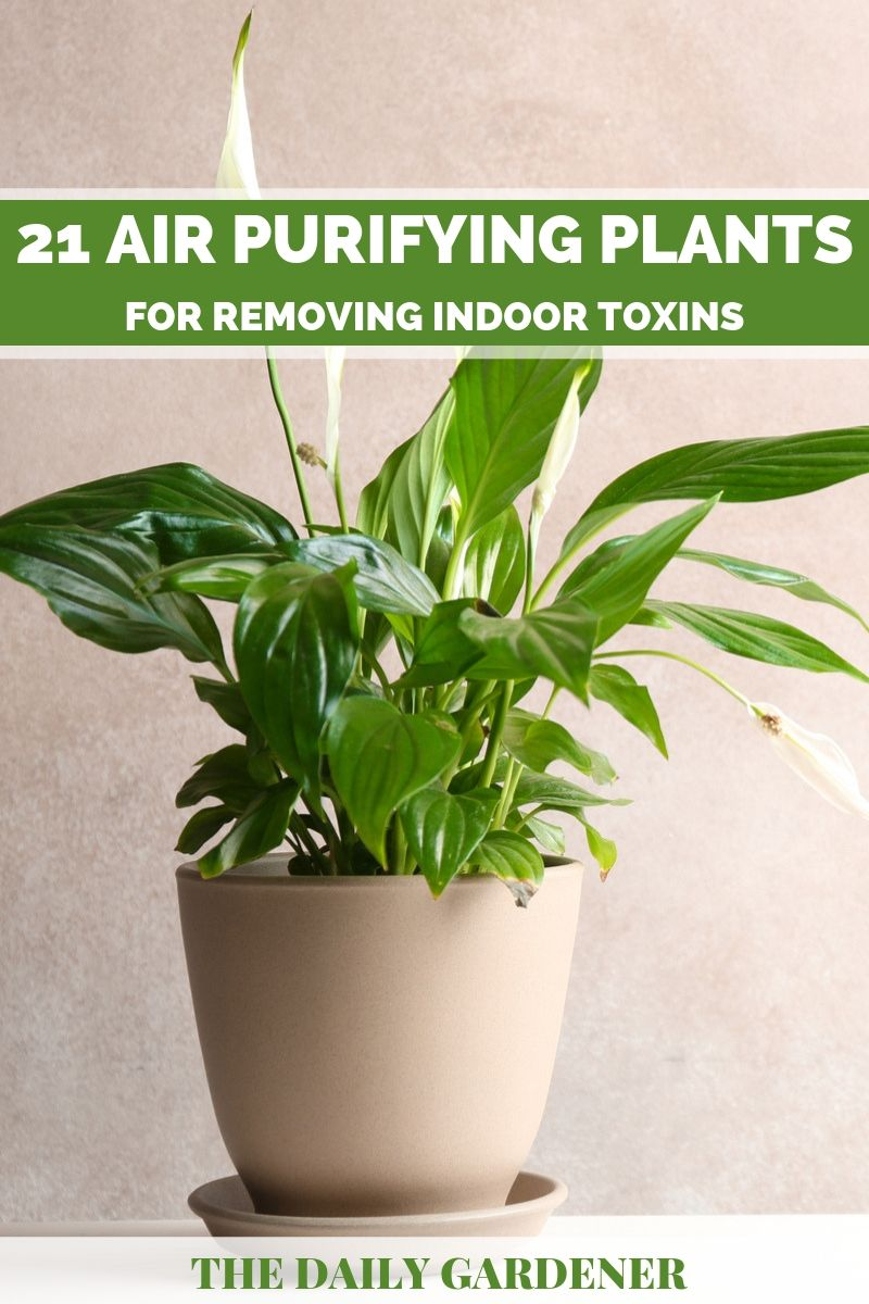 purify air plants 2