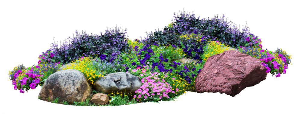 rain garden Shape and Size