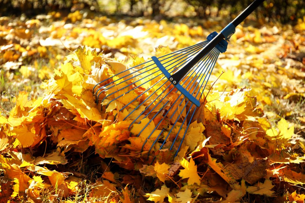 raking the leaves at fall
