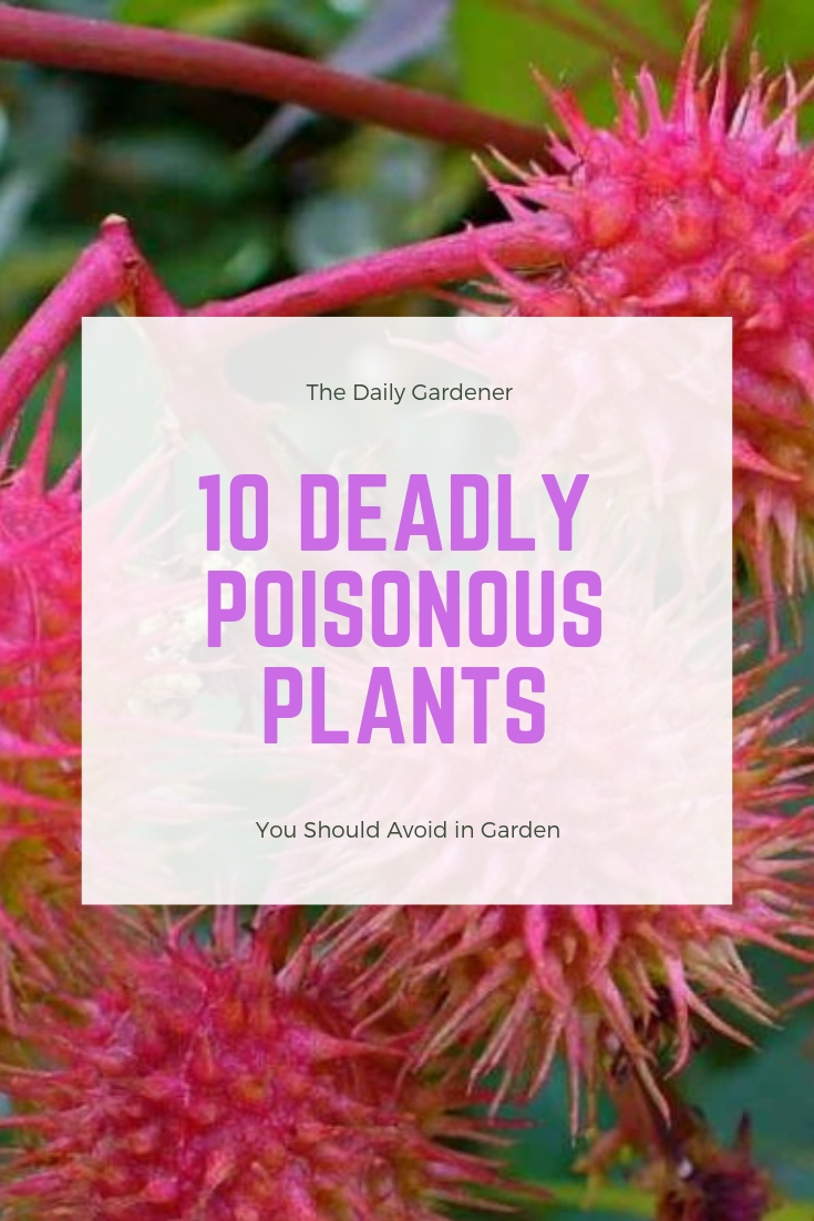 top Deadly Poisonous Plants in Garden