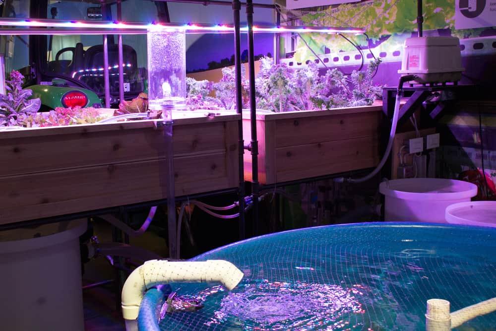 Aquaponic Environment