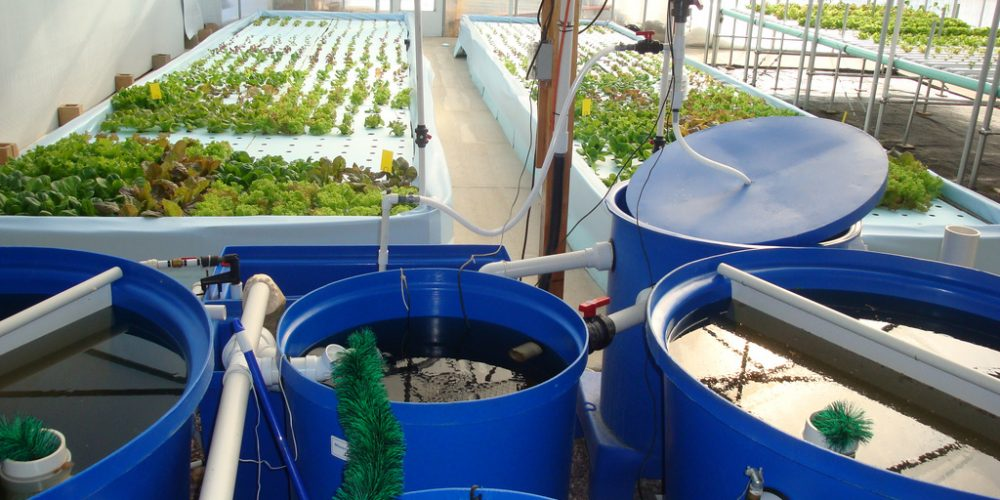 How to DIY Aquaponics Systems? The Unlimited Guide