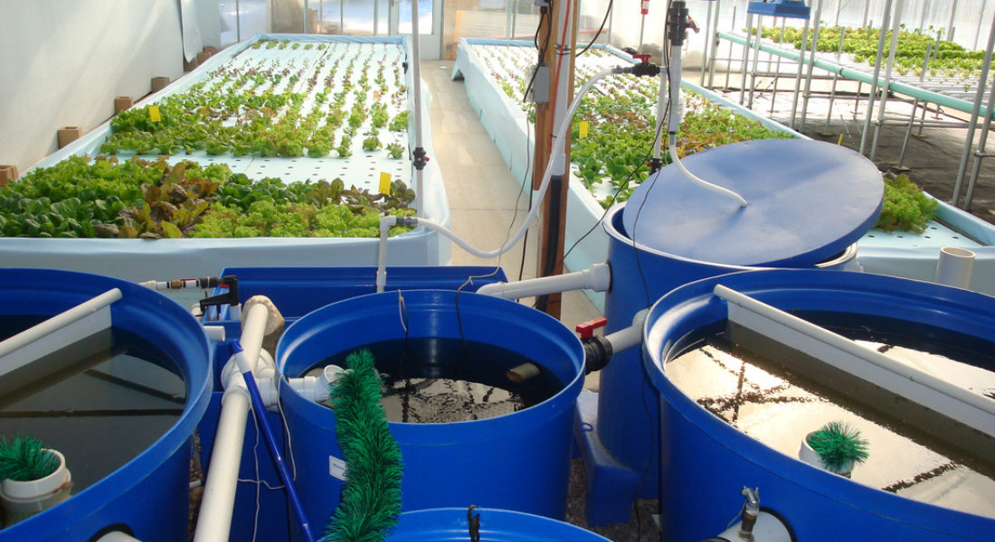 Aquaponics Systems: The Simplest Way to Build at Home