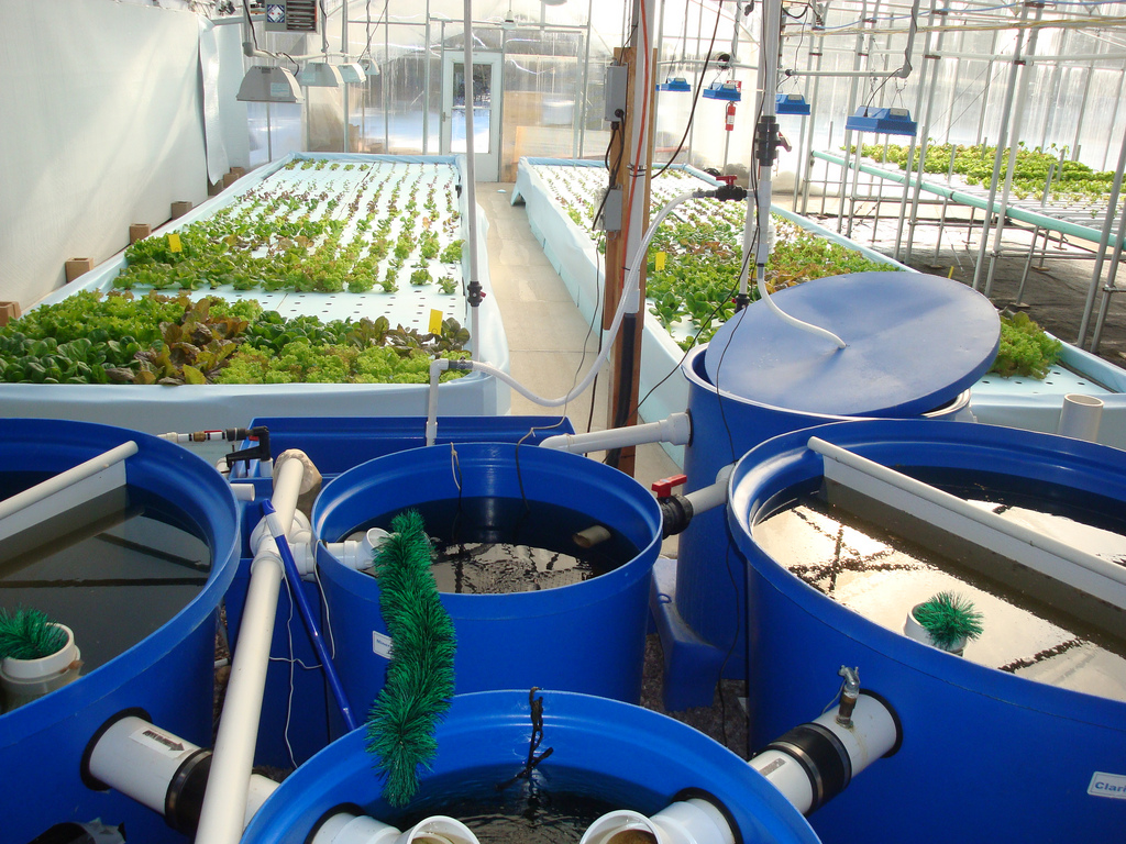 Aquaponics Systems The Simplest Way To Build At Home The