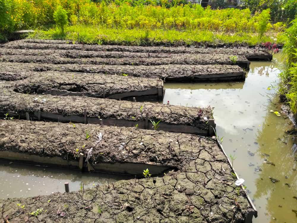 Calla Lilies Soil