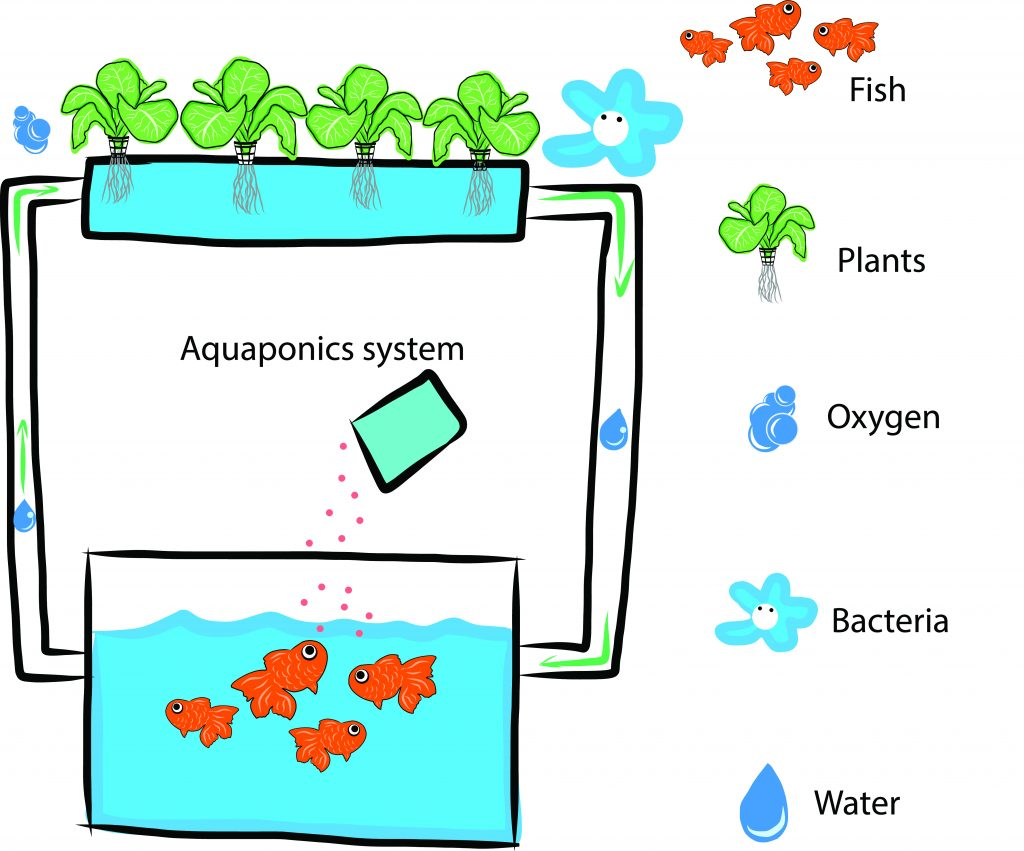 DIY Aquaponics Systems Definition
