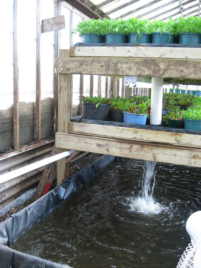 DIY the Aquaponics System