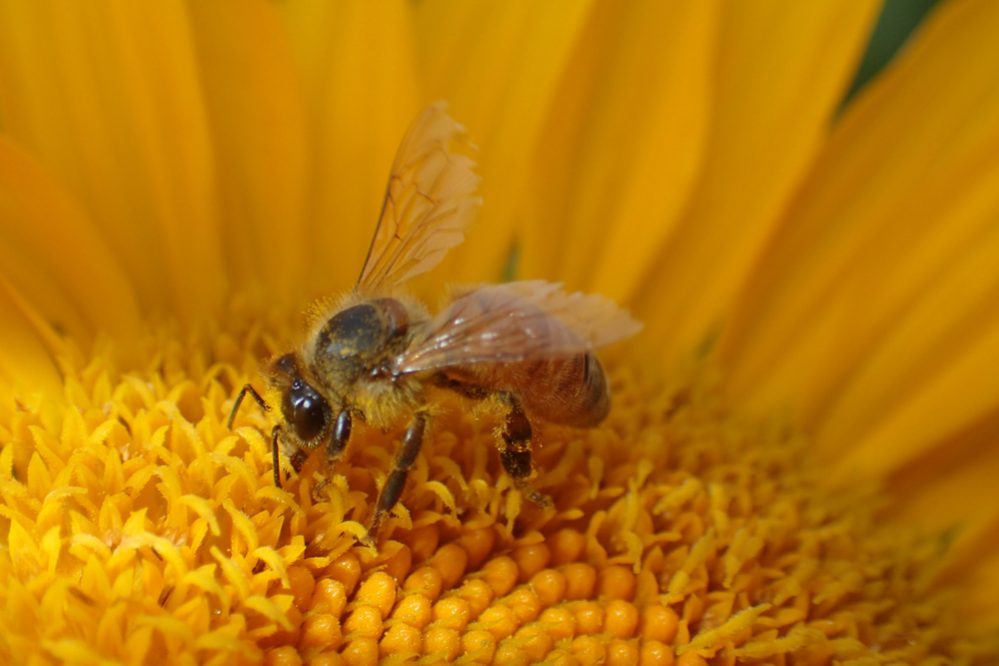 Feed useful pollinators