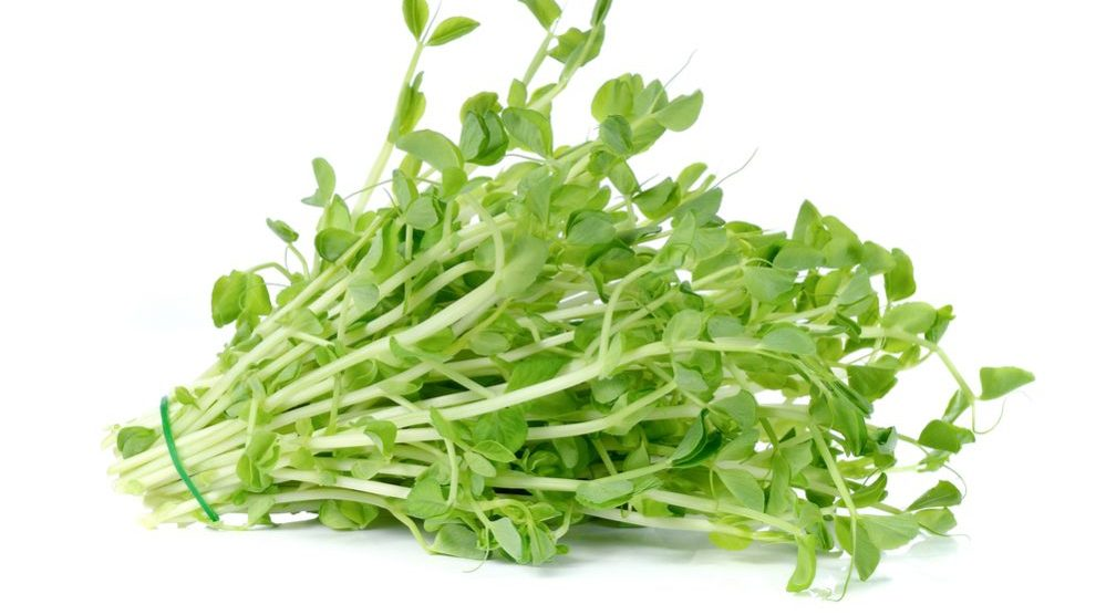 Grow Snow Pea Shoots