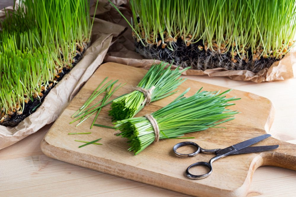 Grow Wheatgrass