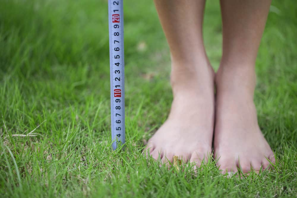 Ideal mowing heights for your lawn