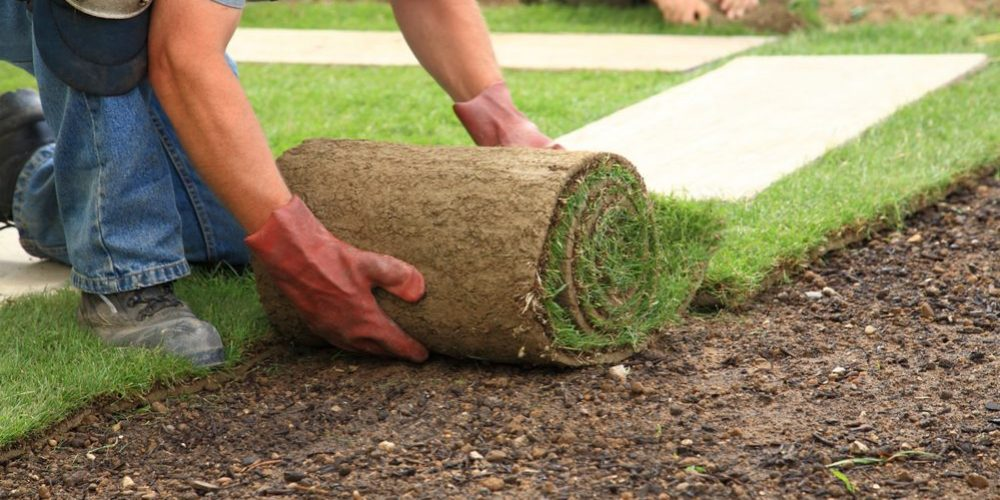 6 Easy Steps to Lay Sod for Beginners