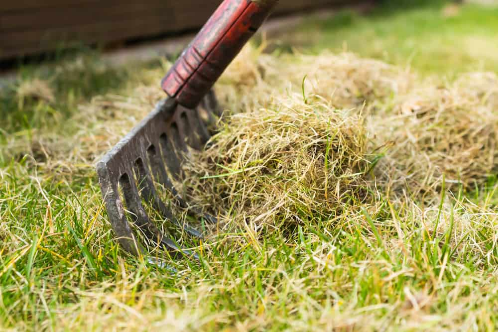 Tidy up lawn