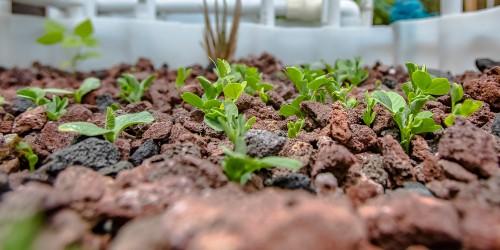 aquaponic grow media