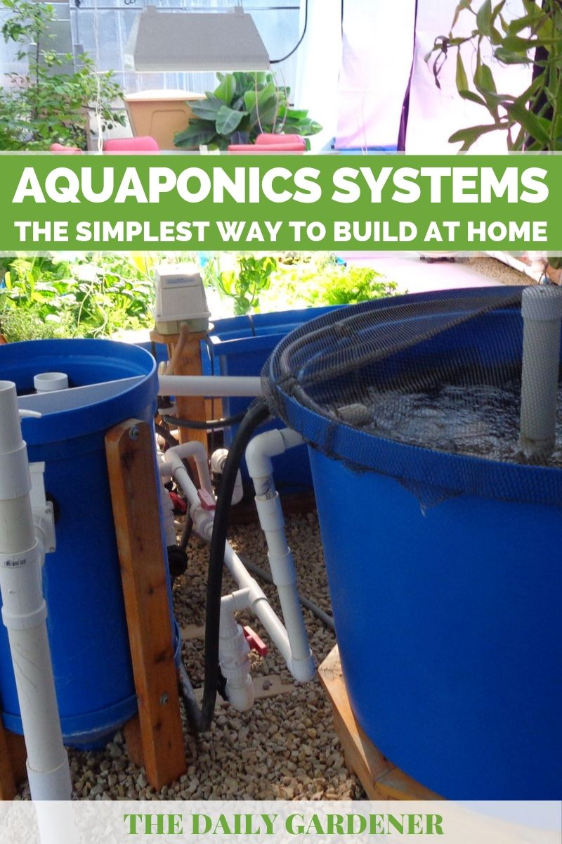 Aquaponics Systems: The Simplest Way to Build at Home - The
