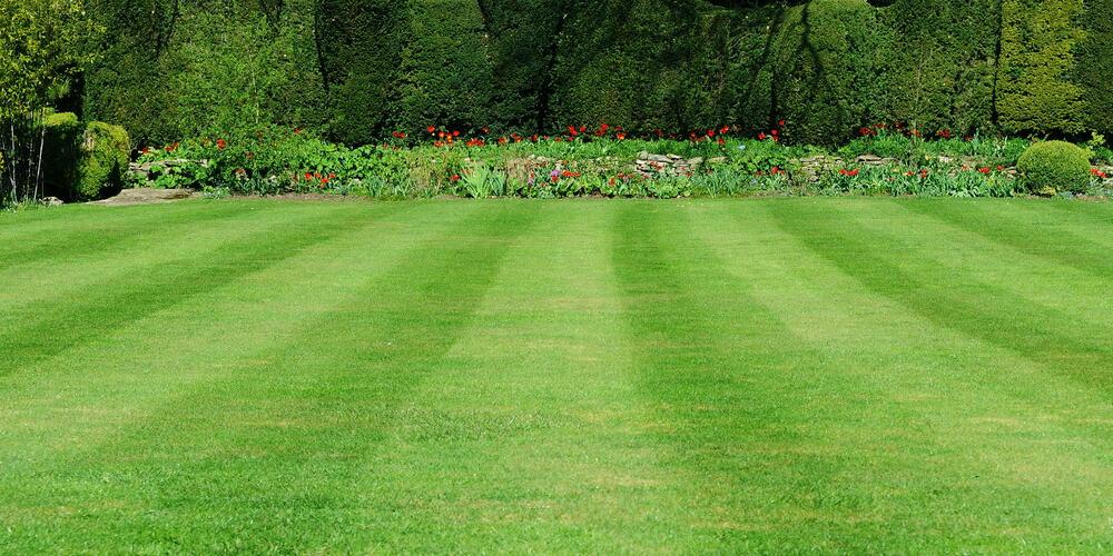 mow lawn Rows