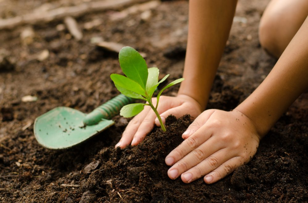 Add Compost to Existing Plants