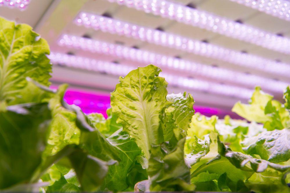 Best LED Grow Lights PPFD