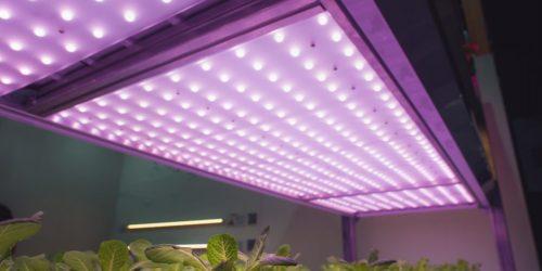 Best LED Grow Lights 2019 – 300W, 450W, 600W, 1000W, 1200W, 1500W, 2000W