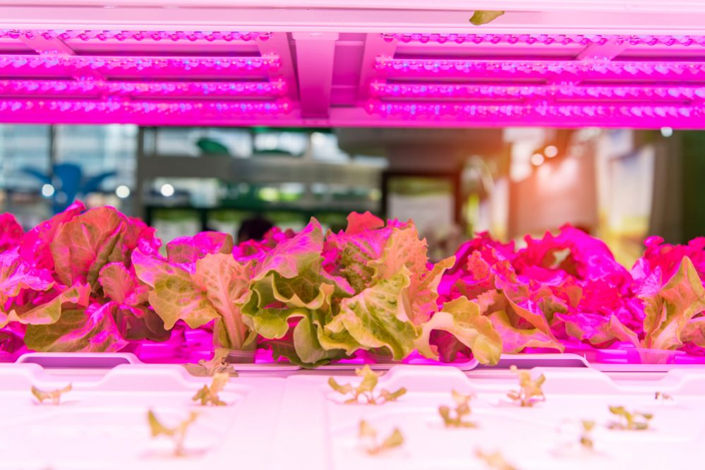 Best LED Grow Lights worth