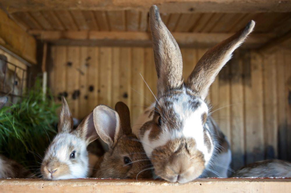 Best Rabbit Hutch for Outdoor & Indoor Size