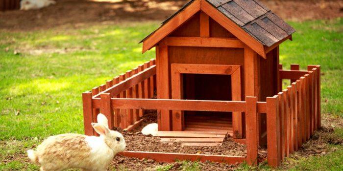 Best Rabbit Hutch for Outdoor & Indoor