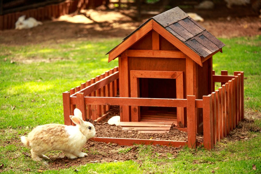 Best Rabbit Hutch for Outdoor & Indoor