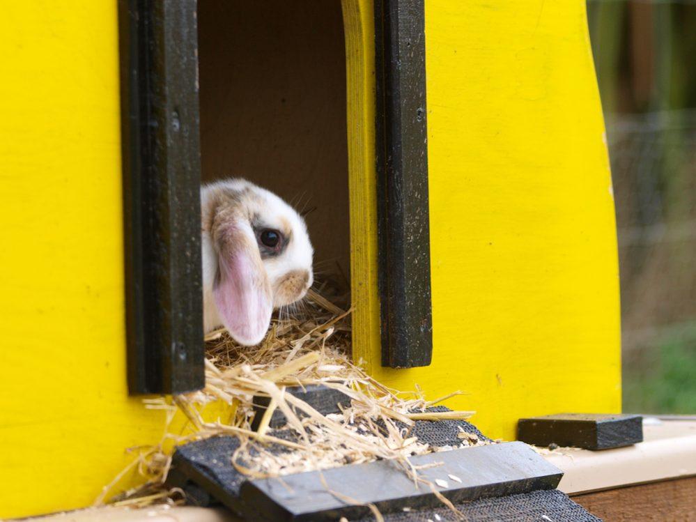 Best Rabbit Hutch for Outdoor & Indoor type