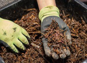 Worm Compost bin Harvesting