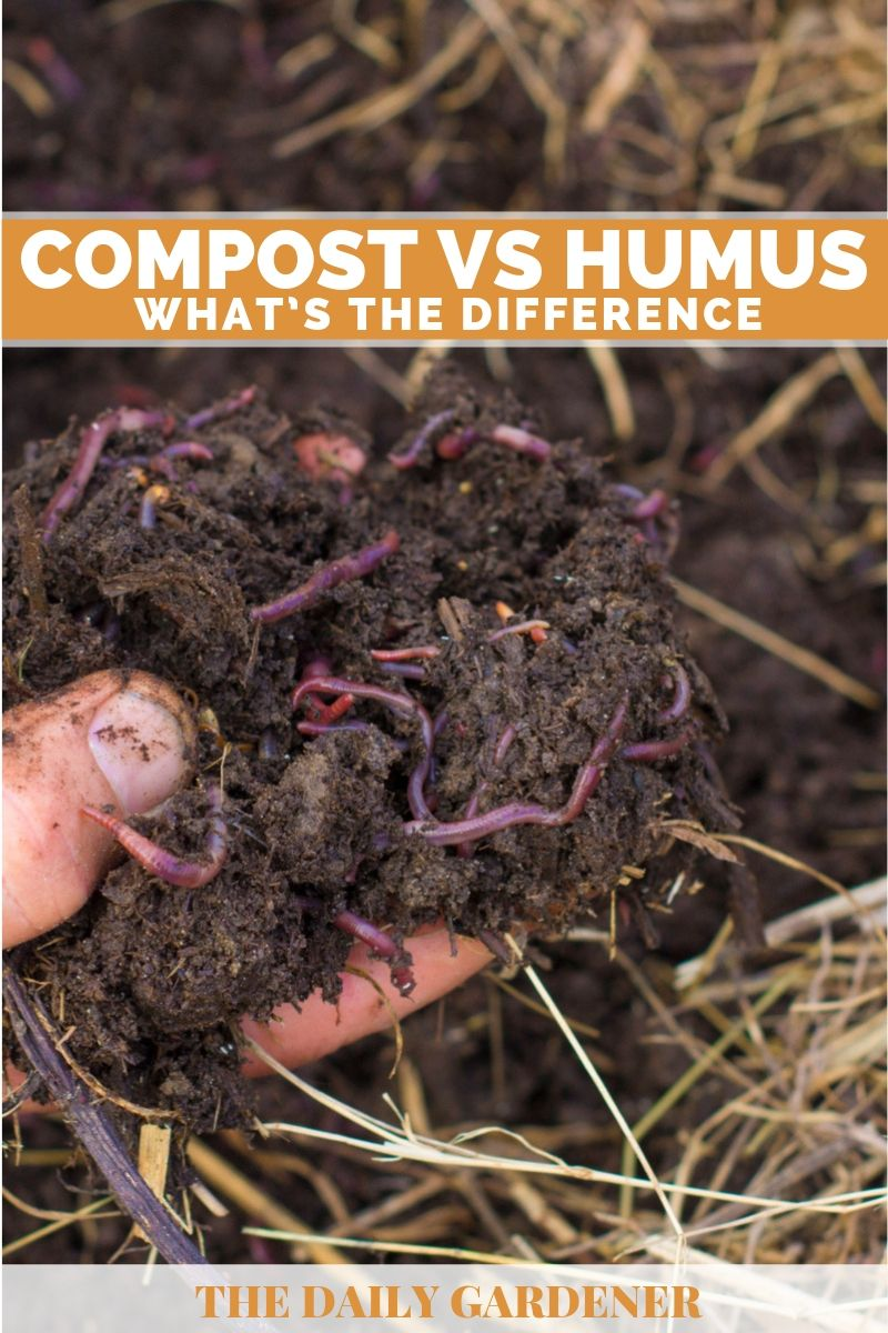 Compost VS Humus 1