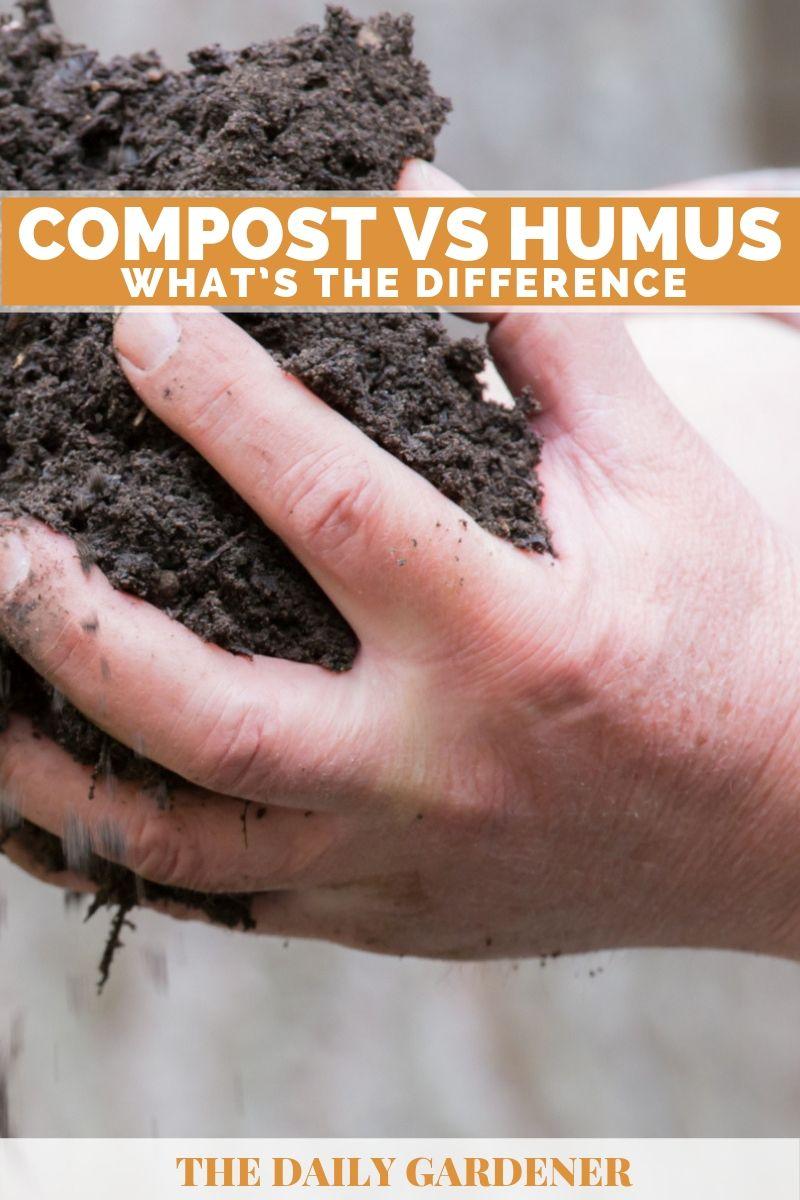 Compost VS Humus 2