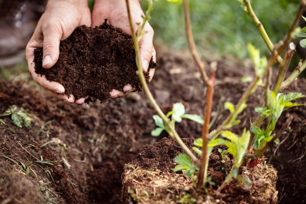 Compost & humus in practice