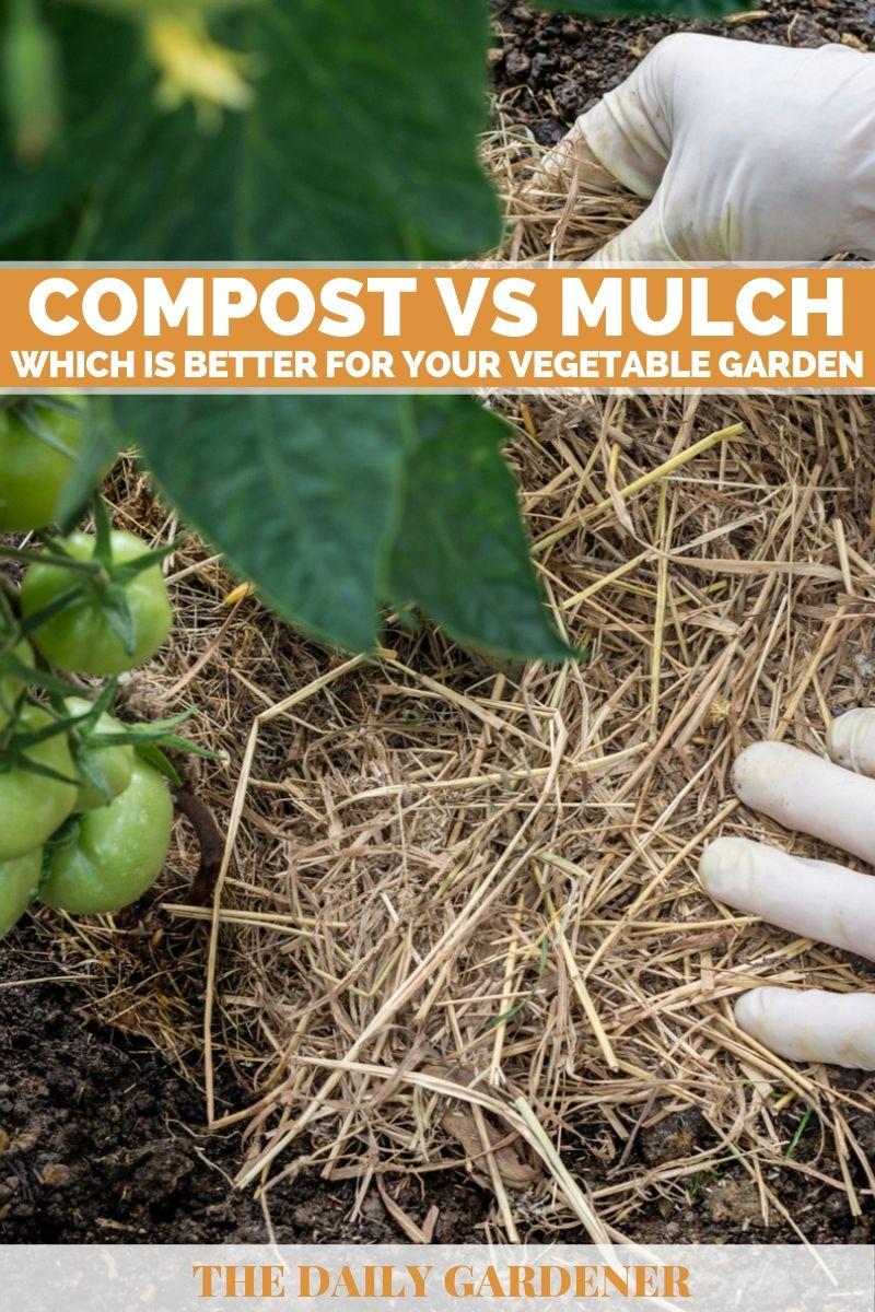 Compost vs Mulch 1