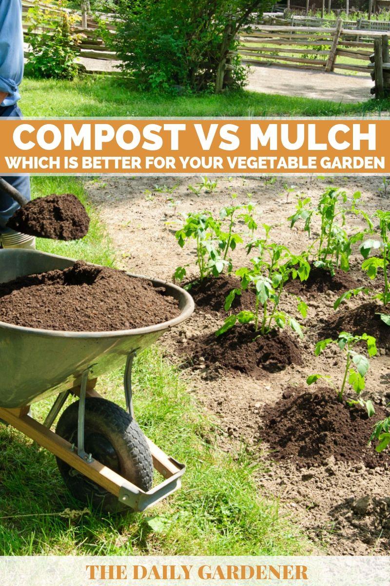 Compost vs Mulch 2