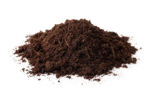 Compost vs Peat Moss