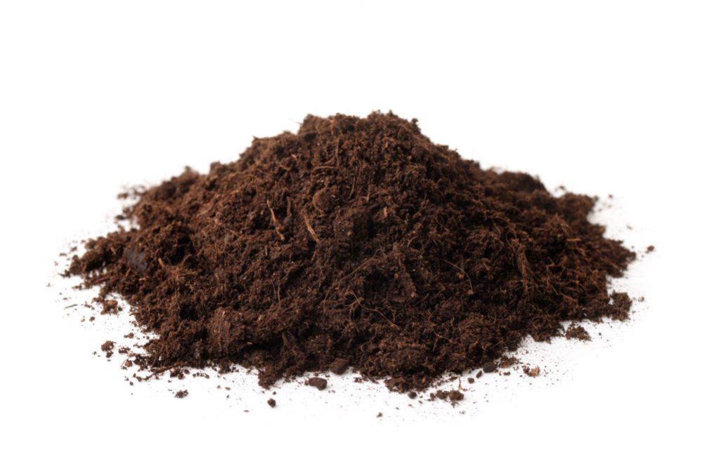 Compost vs Peat Moss
