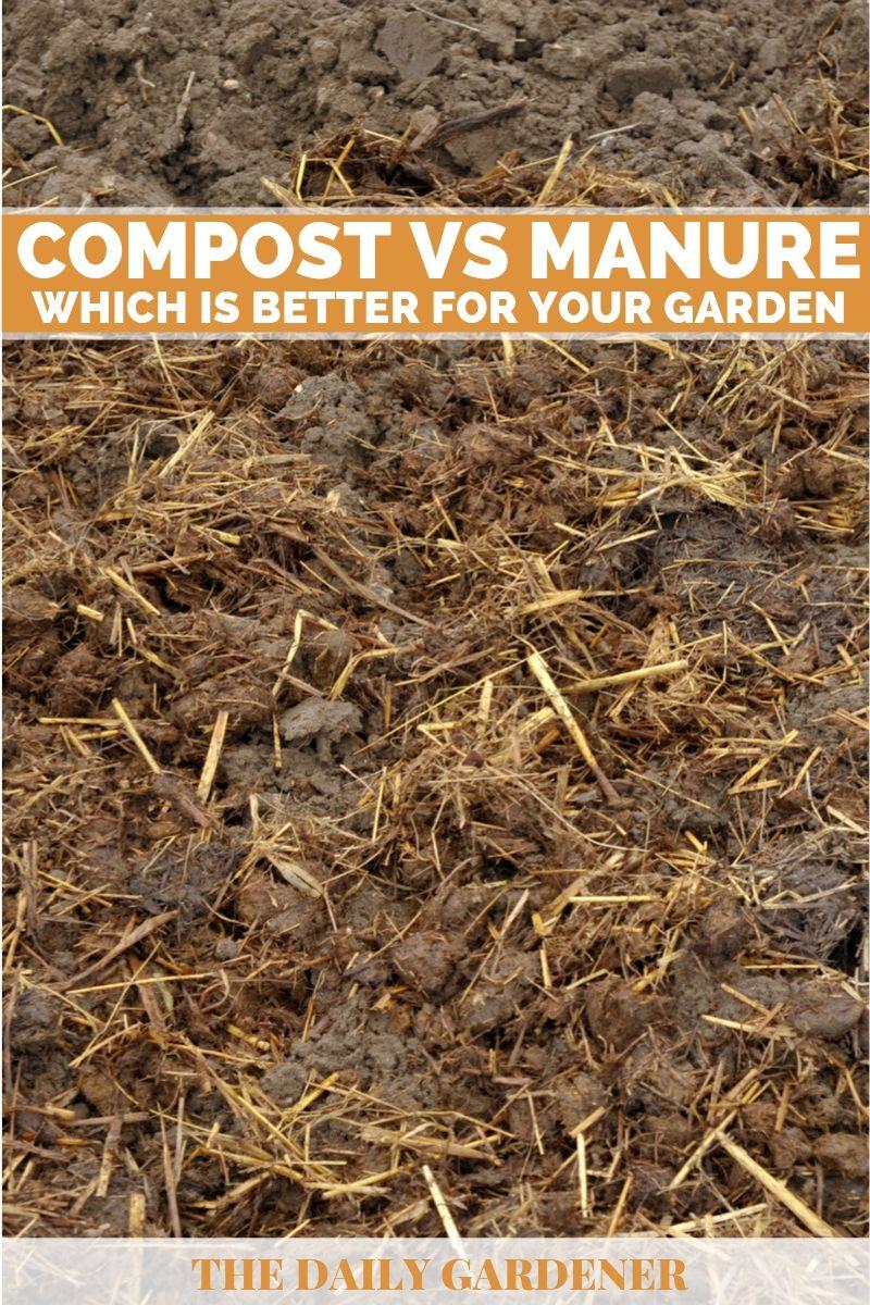 Compost vs manure 3