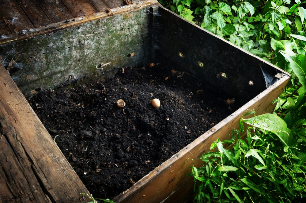 Differences between Fertilizer and Compost