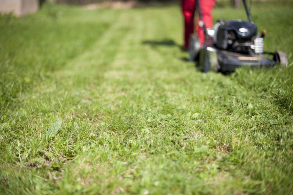 What to look for Best Self Propelled Lawn Mower