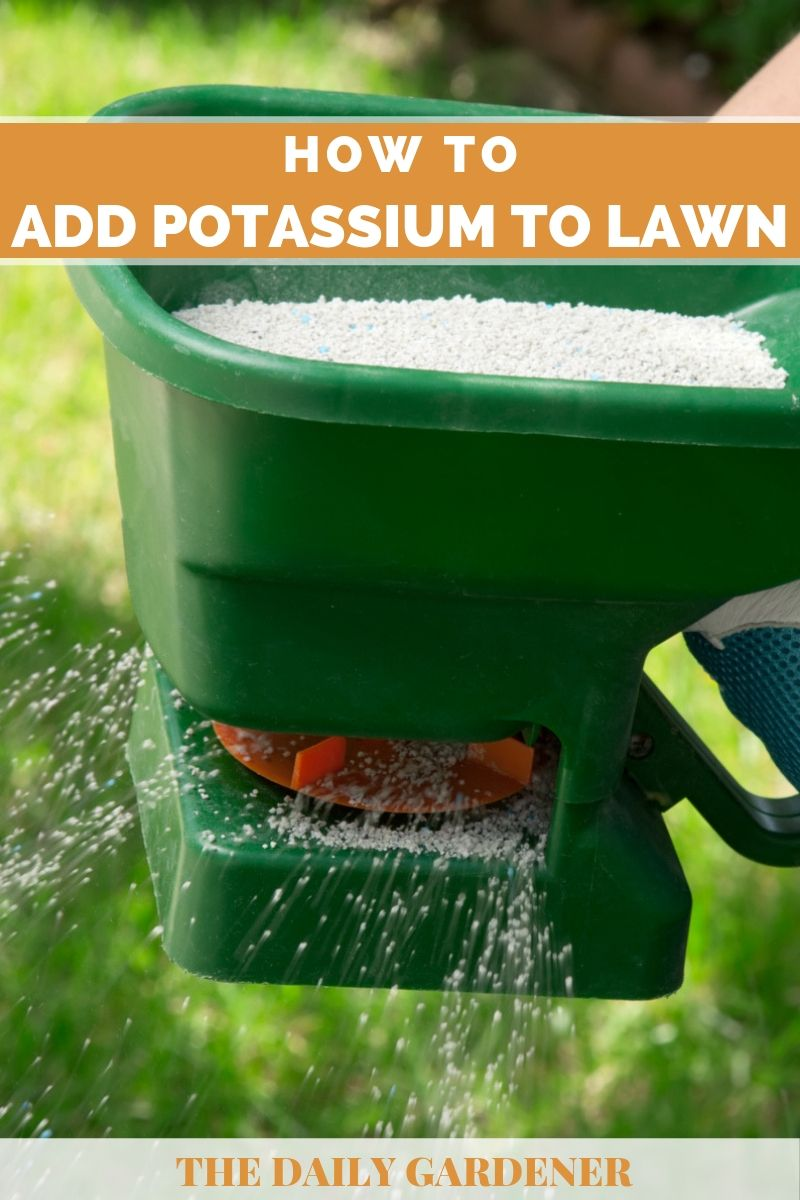 Add Potassium to Lawn 1
