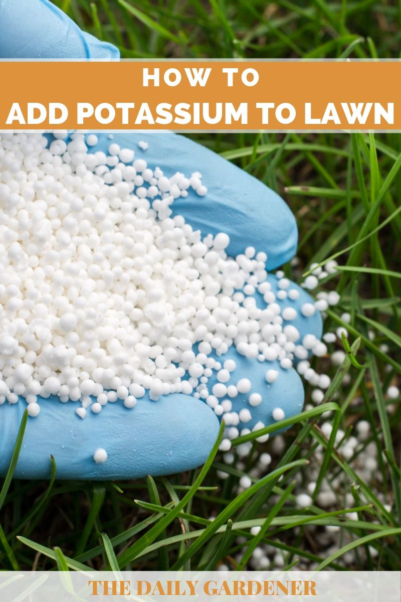 Add Potassium to Lawn 2