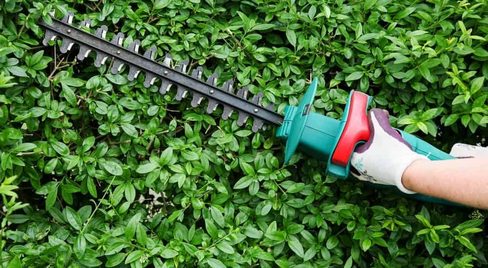 Best Electric Hedge Trimmer Reviews