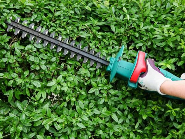 7 Best Electric Hedge Trimmers (Reviews of 2021)