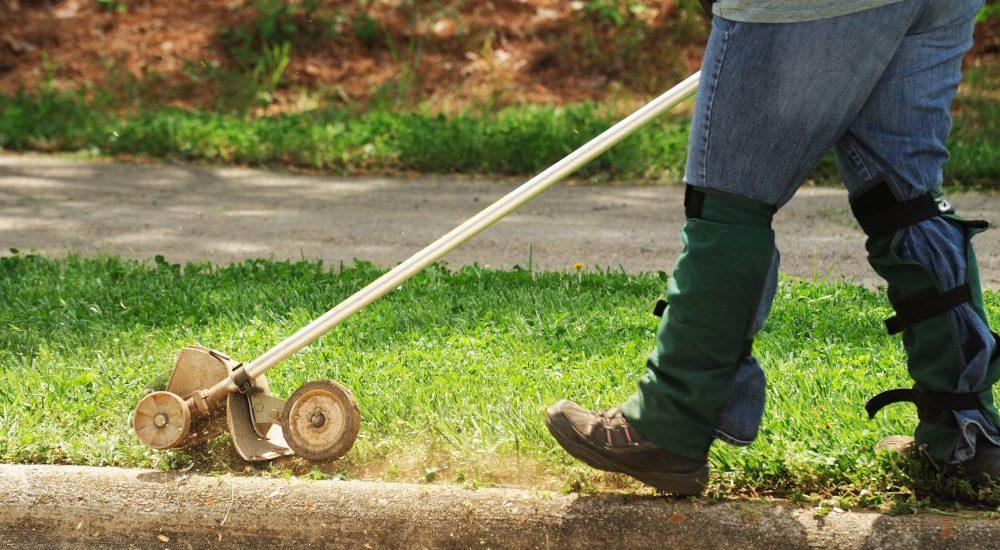 The Daily Gardener
